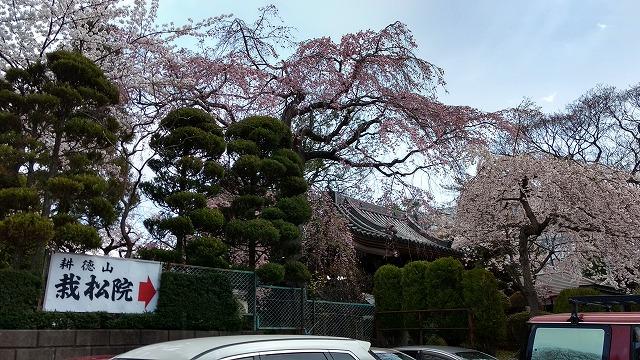 1704shinobu010.jpg