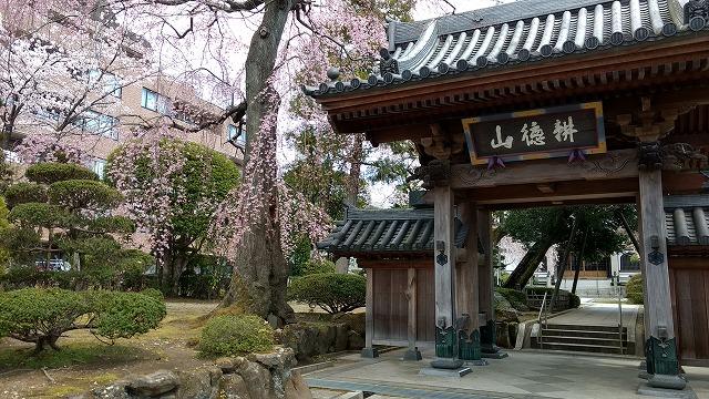 1704shinobu012.jpg