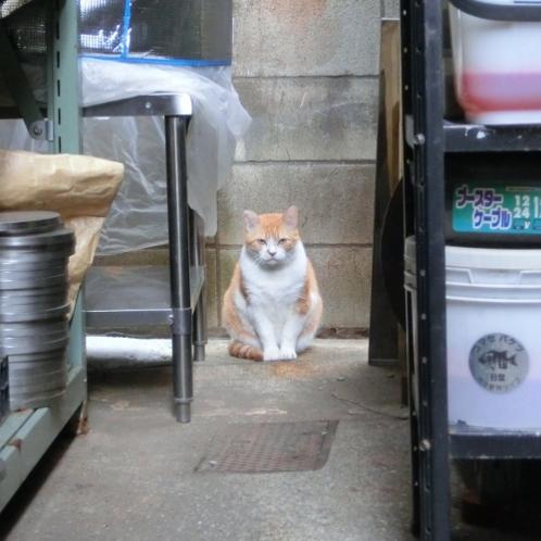 大田区 池上 パンタレイ panta rhei 猫 ねこ ギャラリー 工場長 装身具 アクセサリー ざぼん