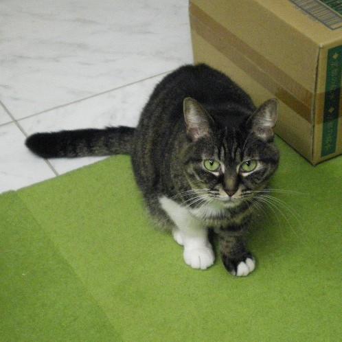 大田区 池上 パンタレイ panta rhei 猫 ねこ ギャラリー 工場長 装身具 アクセサリー