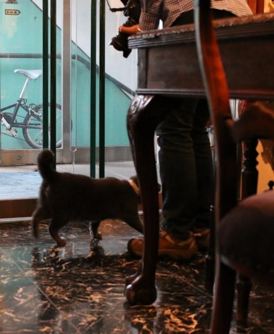 パンタレイ panta rhei 大田区 池上 ギャラリー 猫 ねこ 店長 ダミアン 煮干し