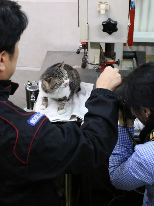 イワキ精工 工場長 猫 ねこ NyAERA ニャエラ 大田区 池上 パンタレイ