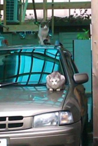ポスティングで出会える猫さん1