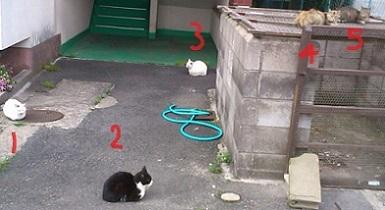 ポスティングで出会える猫さん2