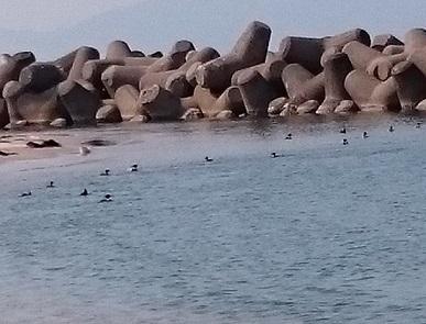 水鳥海水浴