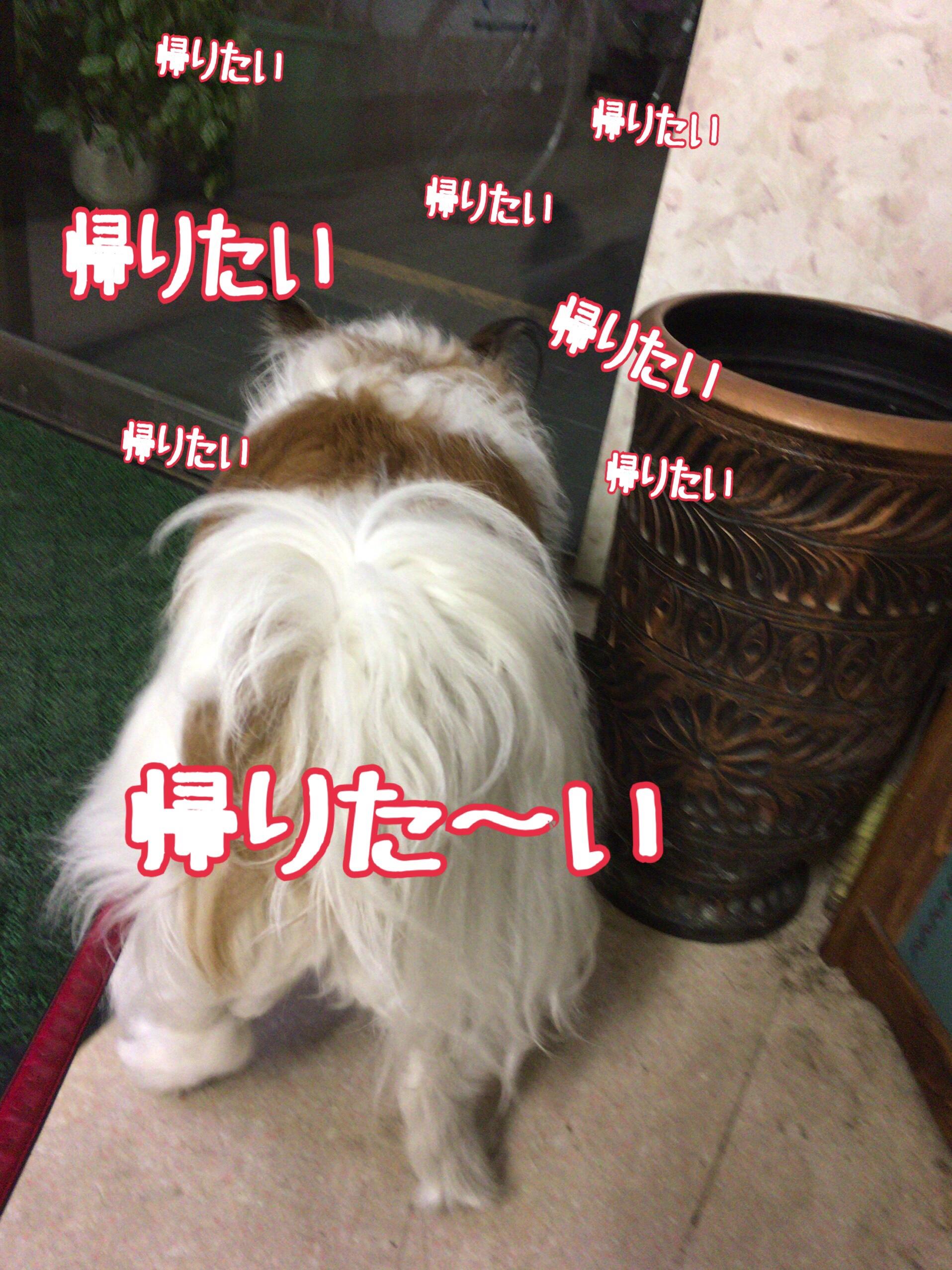 fc2blog_201704071102443fc.jpg