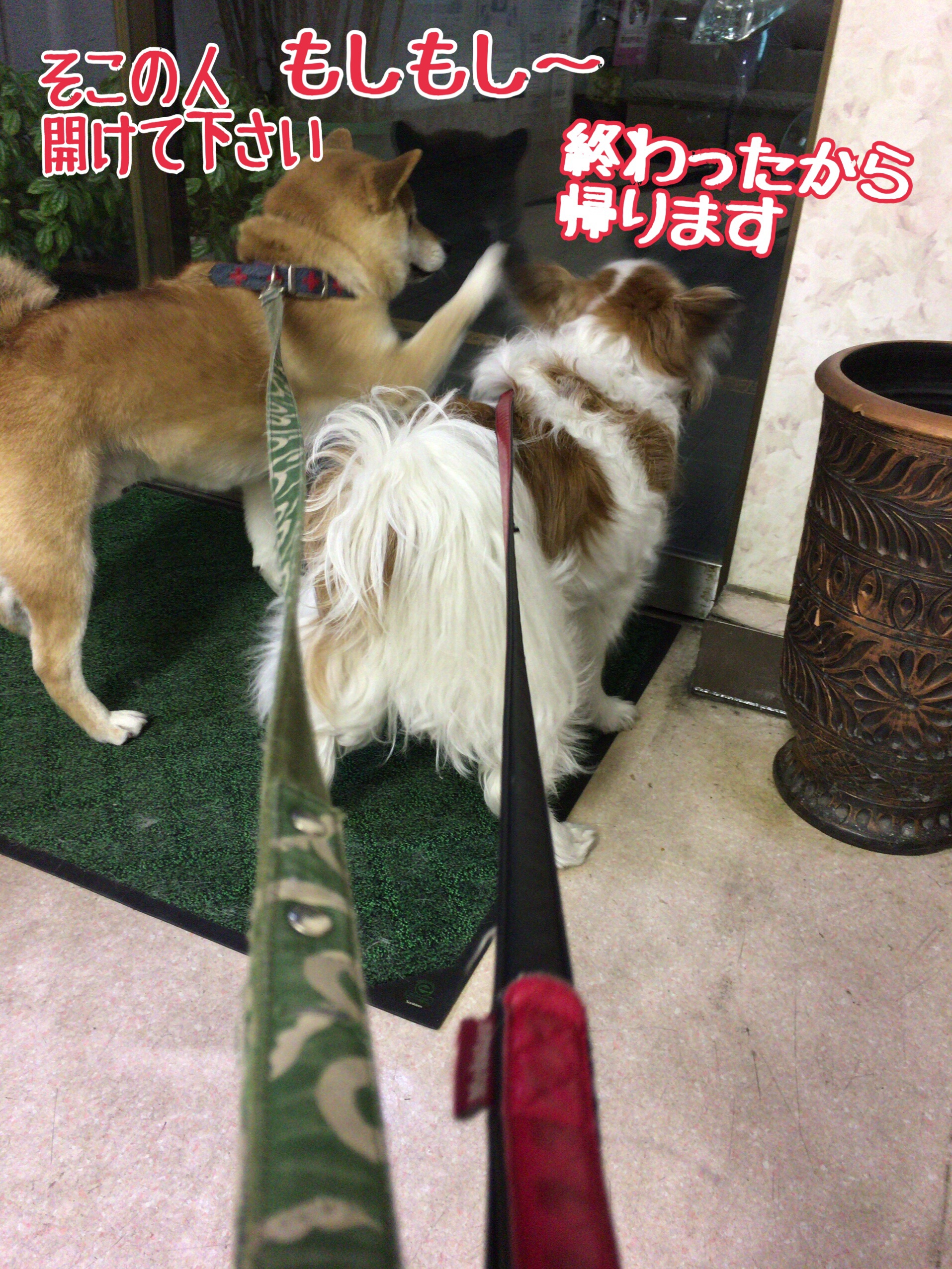 fc2blog_20170407110249683.jpg