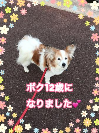 fc2blog_20170412110726cf1.jpg