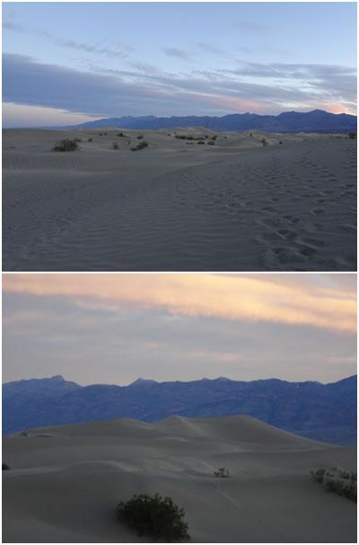 メスキートフラット砂丘1