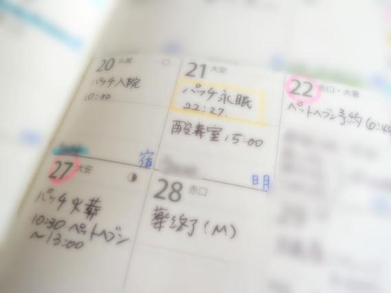 DSCN9016_s2.jpg