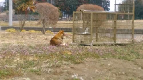 太田の犬5