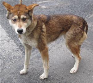 太田の犬6