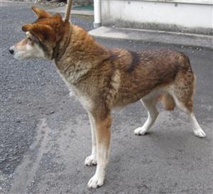 太田の犬7