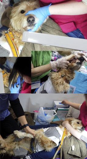 歯磨き体験