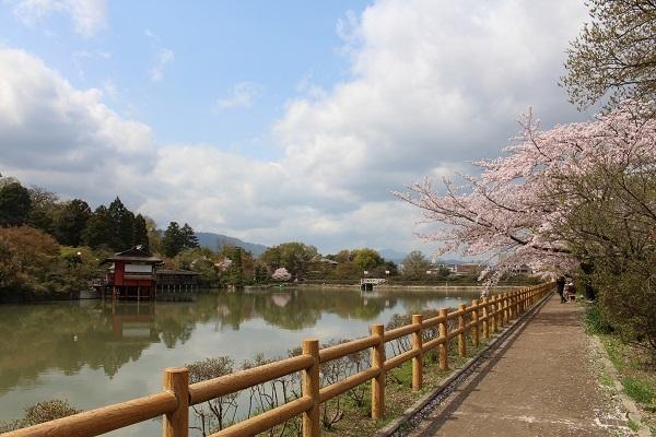 2017.04.17 満開の桜(長岡天満宮)①-7