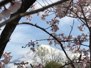桜2017.4.12