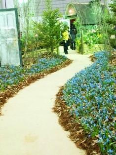my-garden 139