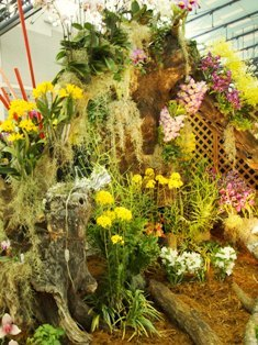 my-garden 262