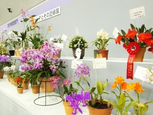 my-garden 268