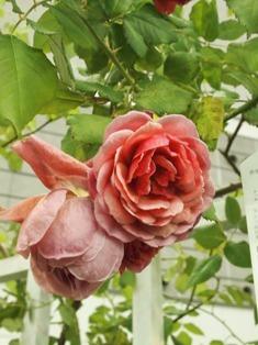 my-garden 193