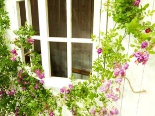 my-garden 212