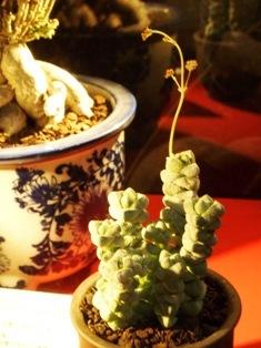 my-garden 231