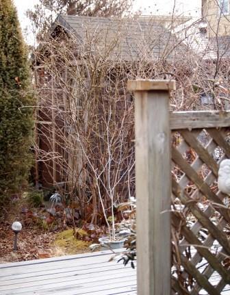my-garden 075