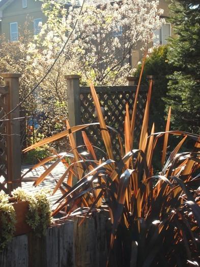 my-garden 040