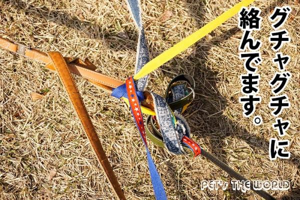 2017-03-19-09.jpg