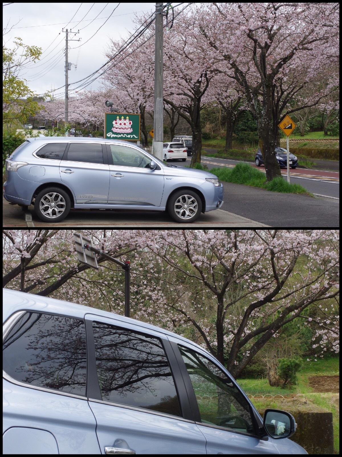 神奈川県秦野市はだの桜みち アウトランダーPHEV