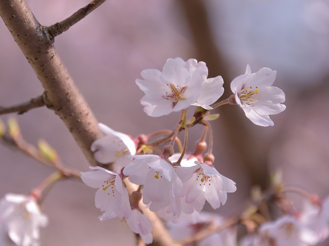 佐々木桜5