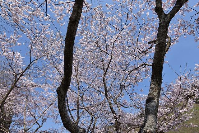佐々木桜6