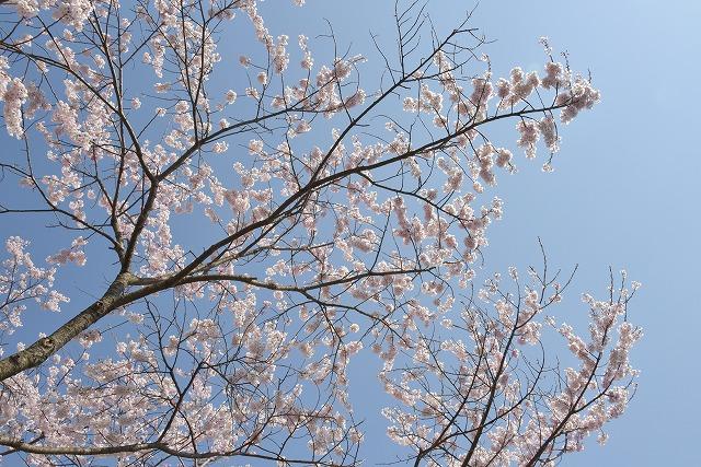 佐々木桜9