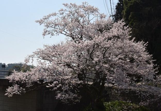 佐々木桜4