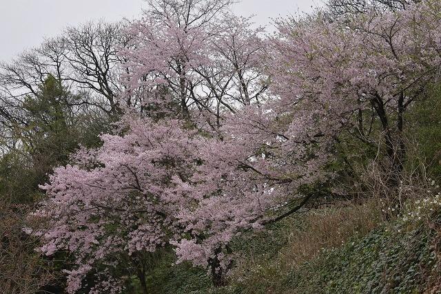 江波山16