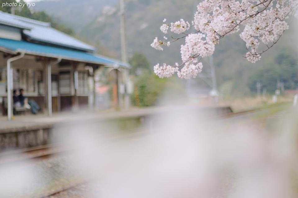 最後の桜と共に_20170408_7