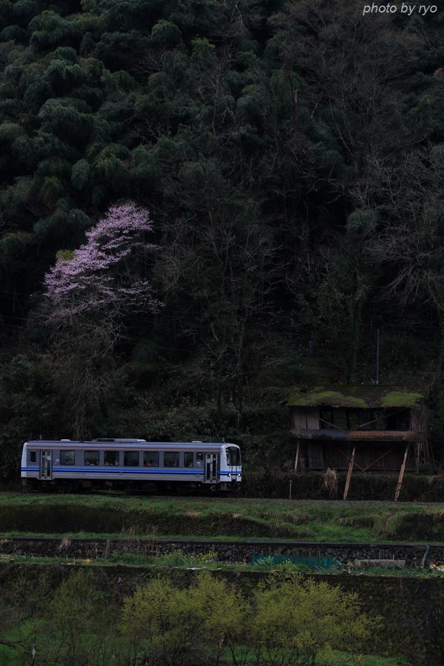 最後の桜と共に_20170409_3