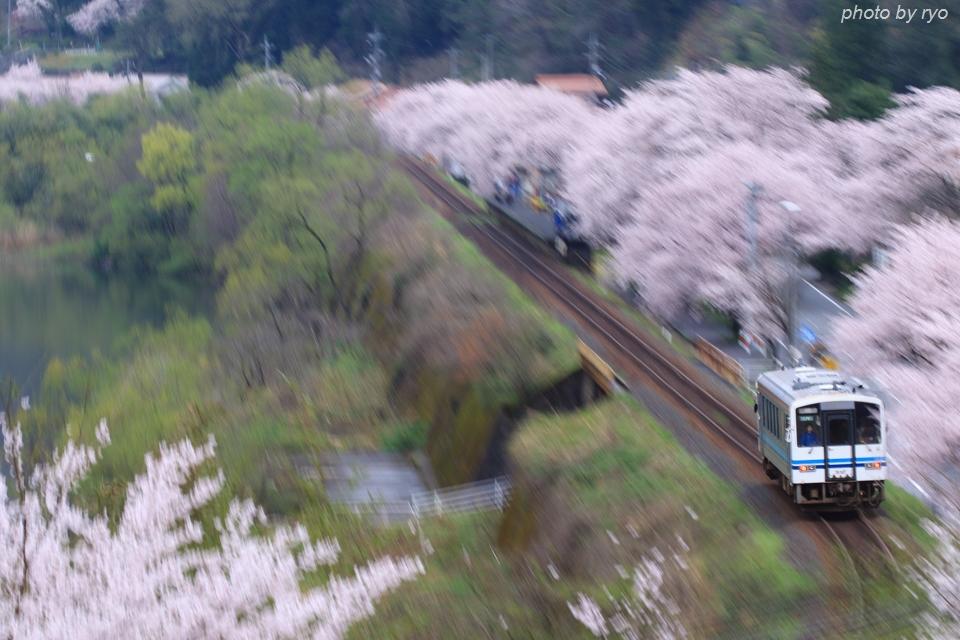 最後の桜と共に_20170409_4