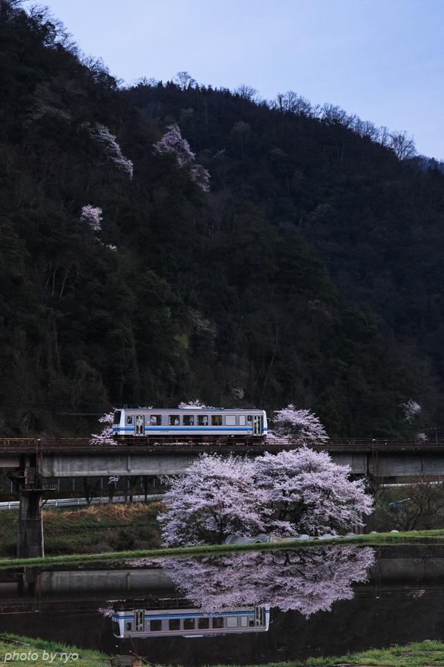 最後の桜と共に_20170410_1