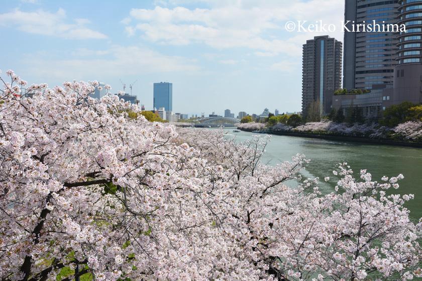 Sakuranomiya311.jpg
