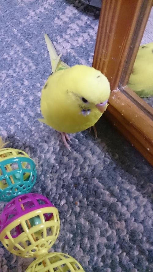 小鳥283