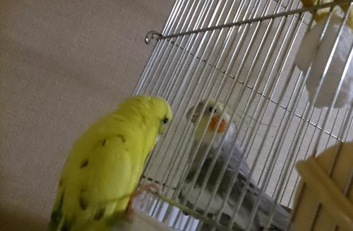 小鳥285