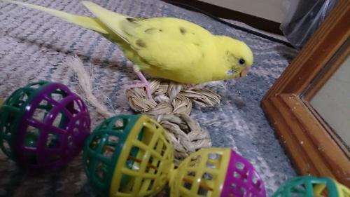 小鳥287