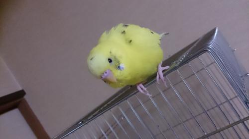 小鳥288