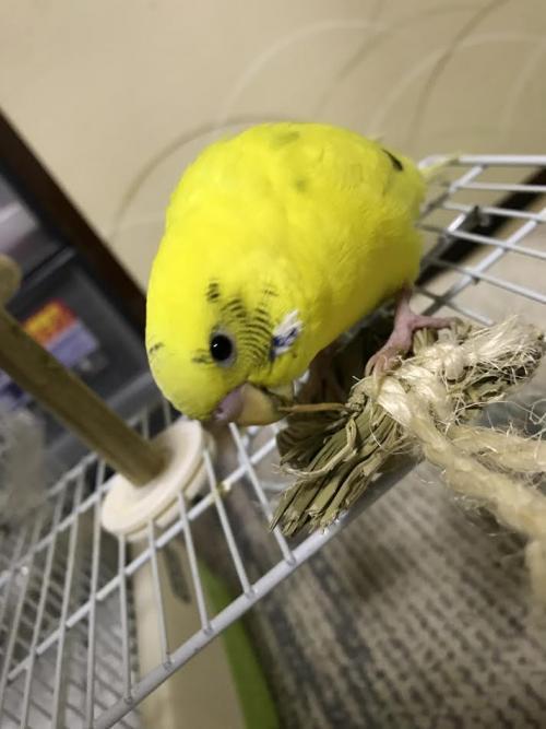 小鳥291
