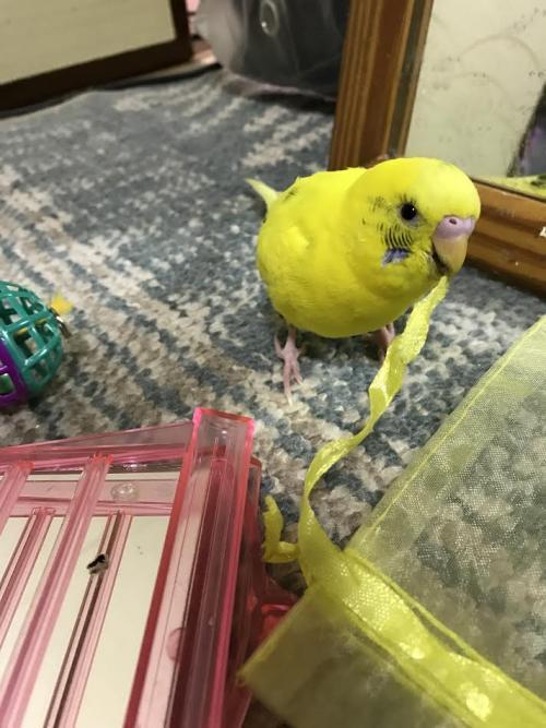 小鳥295