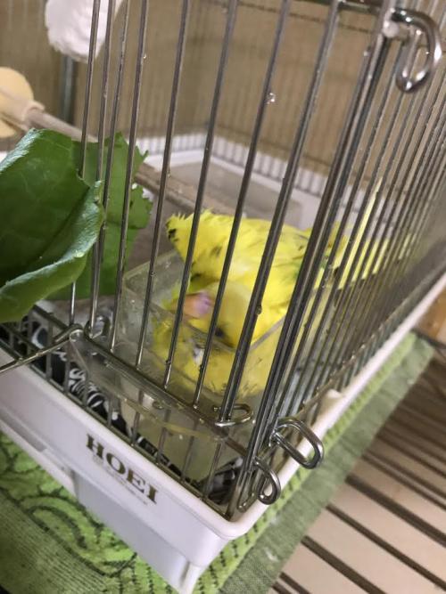 小鳥297