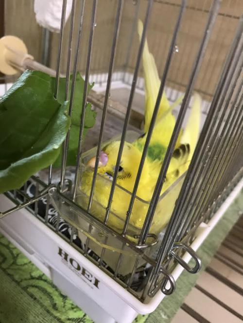 小鳥299