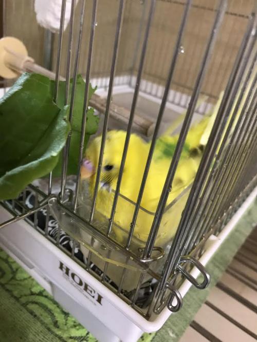 小鳥300