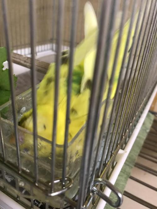 小鳥301